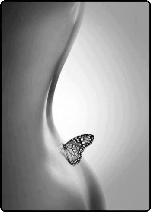 -454- Minute papillon !